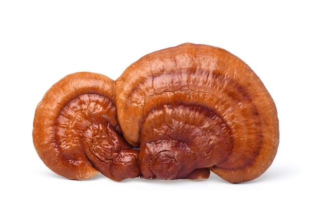Grande fungo reishi (lingzhi) isolato su sfondo bianco. tracciato di ritaglio. Foto Premium