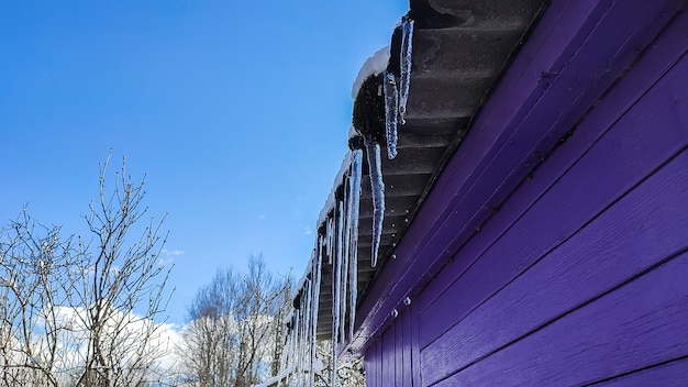 Grandi ghiaccioli trasparenti e taglienti che pendono dal tetto di legno della casa