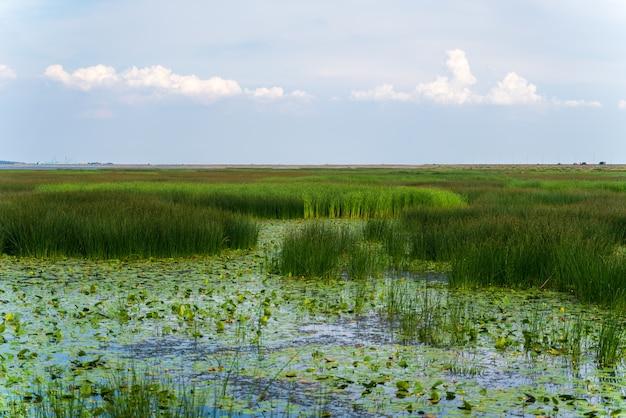 Grande palude con vista sui boschetti della città di ninfee erbose una vista sulla città del bacino idrico
