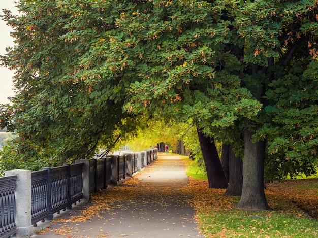 Un grande albero sull'argine a mosca in autunno.