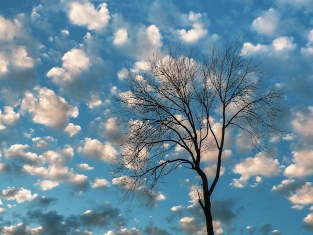 Grande albero senza foglie sullo sfondo del cielo blu serale con nubi cumuliformi