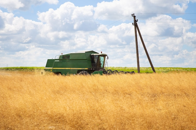 Grande raccolta del campo di grano da una mietitrebbiatrice. giorno soleggiato. agricoltura.
