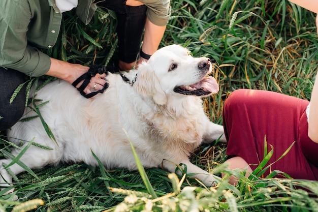 Il grande cane bianco sta riposando con i suoi proprietari tra spighette verdi in estate a passeggio. camminare all'aria aperta. manutenzione e cura degli animali. uno stile di vita sano. amicizia e fiducia. animali domestici.stile di vita.