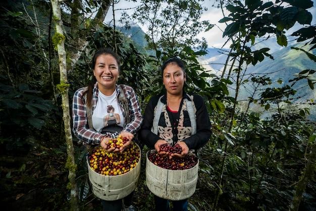 Contadina latinoamericana che lavora nella raccolta con le sue piante e asciuga il caffè in posa
