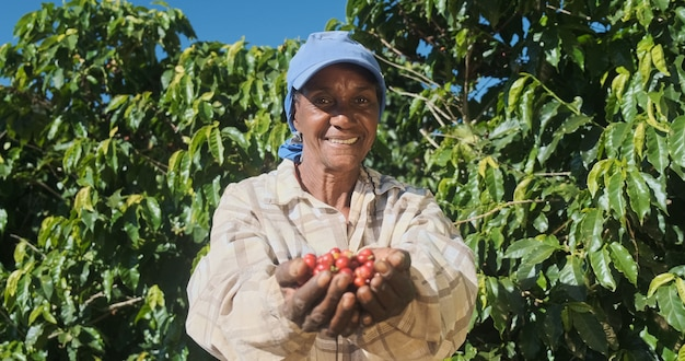 Contadina latina che mostra i chicchi di caffè rossi raccolti nelle sue mani