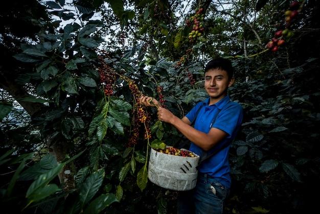 Ragazzo latino che lavora nei campi di caffè nelle montagne peruviane