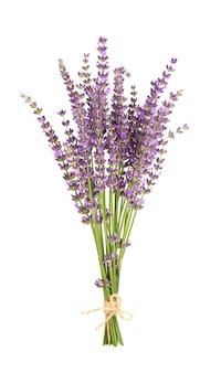 Fiori di lavanda isolati su sfondo bianco mazzetto di lavanda o fiori di lavanda erbe medicinali