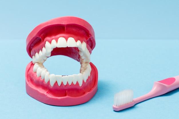 Disposizione della mascella umana e uno spazzolino da denti sullo sfondo blu.