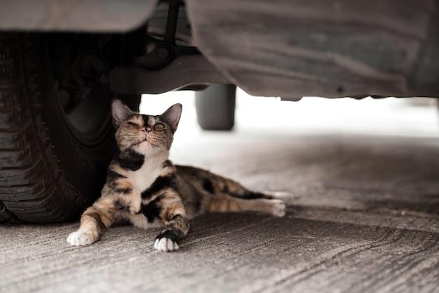 Gatto pigro nascosto sotto l'auto