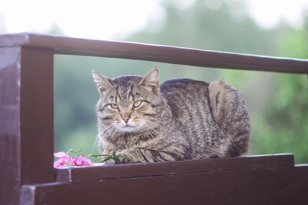 Gatto domestico a strisce pigro che si rilassa sulla ringhiera di legno all'aperto.