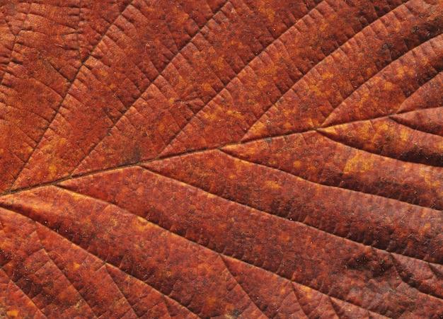 Foglia d'autunno. sfondo autunnale congedo