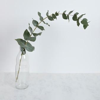Ramo di foglia in vaso sul tavolo