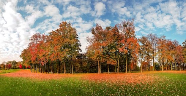 Foglia caduta su erba verde in autunno parco, panorama