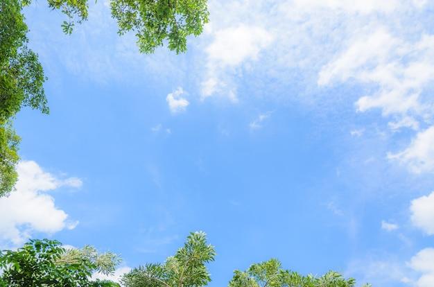 Cornice foglia su sfondo blu cielo