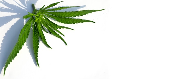 Foglia di cannabis medica o marijuana di alta qualità su sfondo bianco.