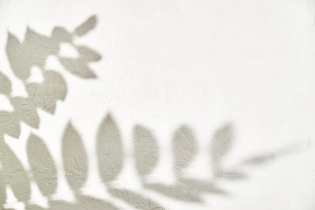 Ombra di foglia su sfondo bianco. sfondo astratto creativo. natura ombra pattern
