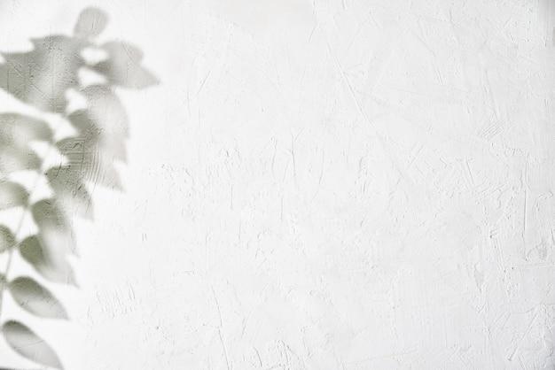 Ombra della foglia su fondo astratto creativo del fondo bianco