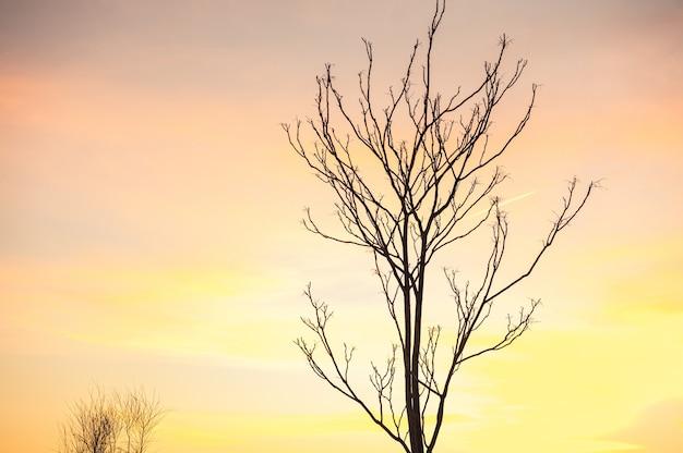 Albero sfrondato contro il cielo al tramonto invernale