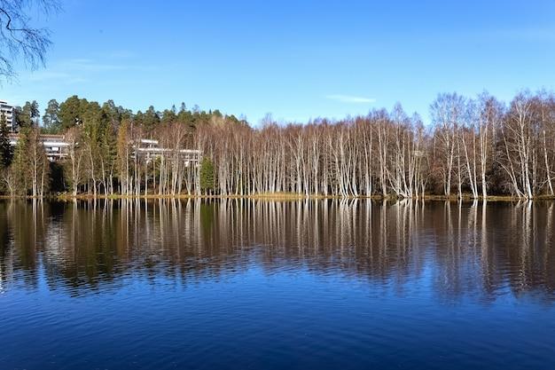 Alberi spogli in autunno e riflesso degli alberi nel lago nudo bosco di betulle in riva al lago foto