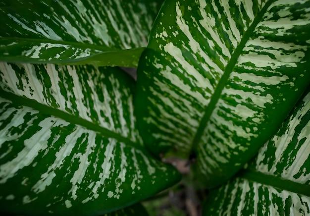 Le foglie usano per purificare l'inquinamento atmosferico. foto di alta qualità