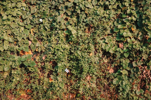 Decorazione del giardino dei fiori della parete delle foglie