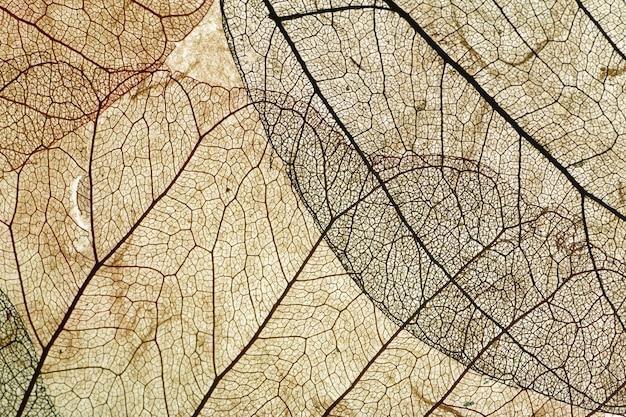 Foglie da vicino sfondo. asciugare in foglie vecchie con un micro motivo su uno sfondo decorativo chiaro