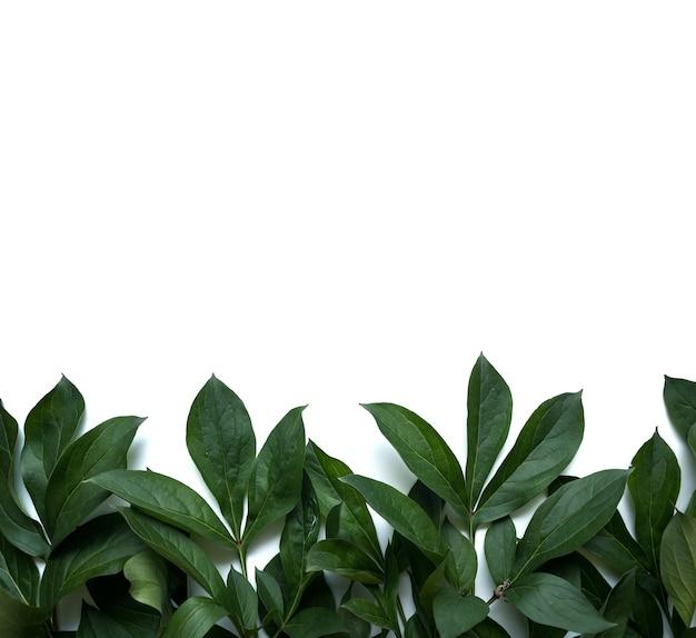 Composizione di foglie. cornice fatta di foglie verdi su sfondo bianco. giorno del matrimonio, festa della mamma e concetto di festa della donna. disposizione piana, vista dall'alto.