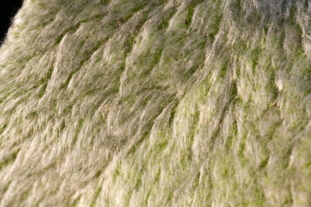 Le foglie dei fiori con un gran numero di peli, c'è polvere e sporco sul fogliame