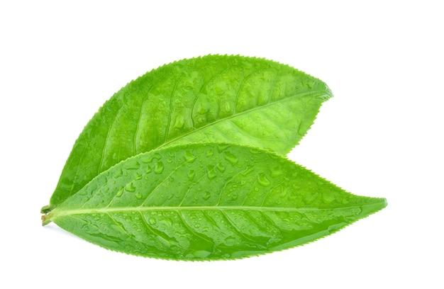 Foglie di tè verde con gocce d'acqua isolate