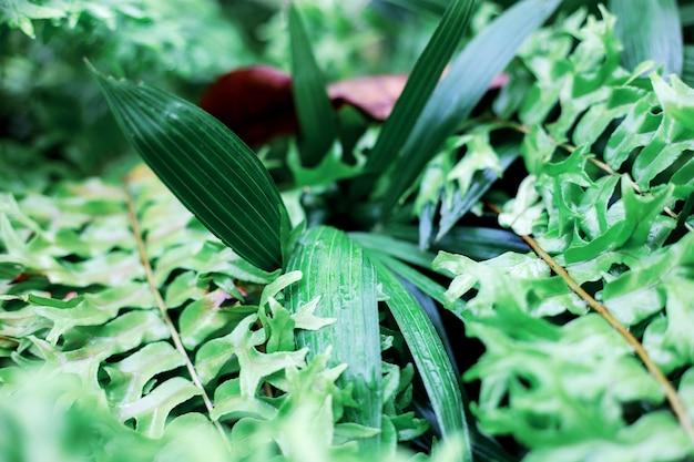 Foglie di piante e felci nella stagione delle piogge con l'alba.