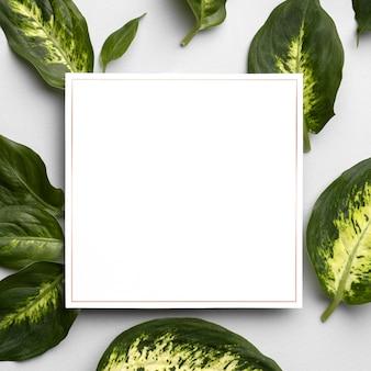 Disposizione di foglie e piante con cornice vuota
