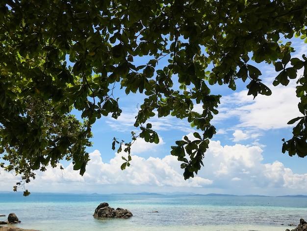 Sagome di foglie con vista da sotto l'albero sullo sfondo del cielo e del mare in una giornata di sole.