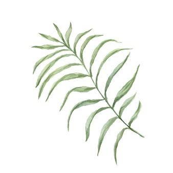 Lascia l'illustrazione disegnata a mano dell'acquerello delle palme della giungla tropicale