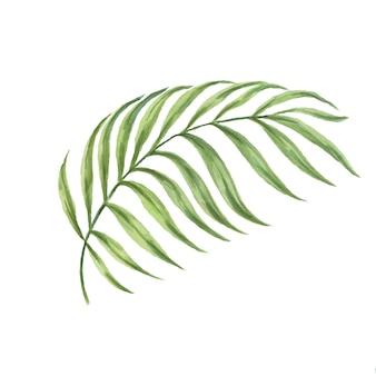 Lascia l'illustrazione disegnata a mano dell'acquerello della giungla tropicale