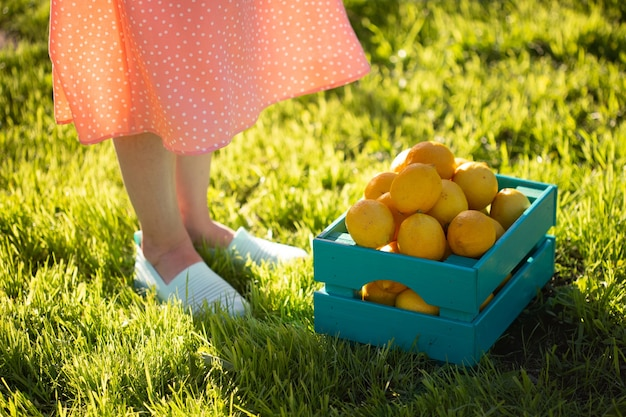 Gambe di una giovane donna giardiniere non identificato in piedi sull'erba verde accanto a una scatola di limoni su un