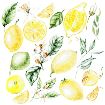 Limoni, fiori e foglie. frutta stile acquerello. illustrazione