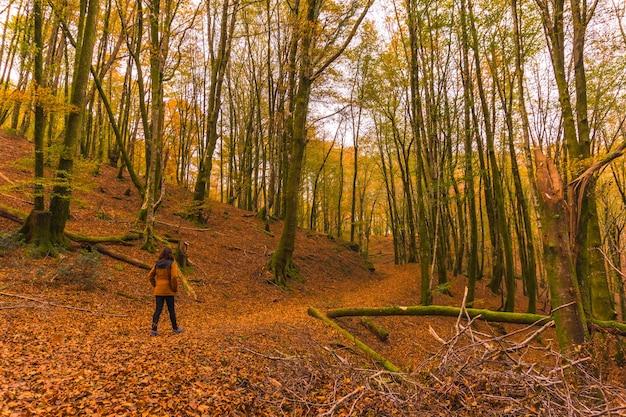 Stile di vita, una giovane bruna in una giacca gialla che cammina lungo il sentiero nel bosco in autunno. foresta di artikutza a san sebastin, gipuzkoa, paesi baschi. spagna