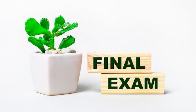 Su fondo chiaro, una pianta in vaso e due blocchi di legno con il testo esame finale.