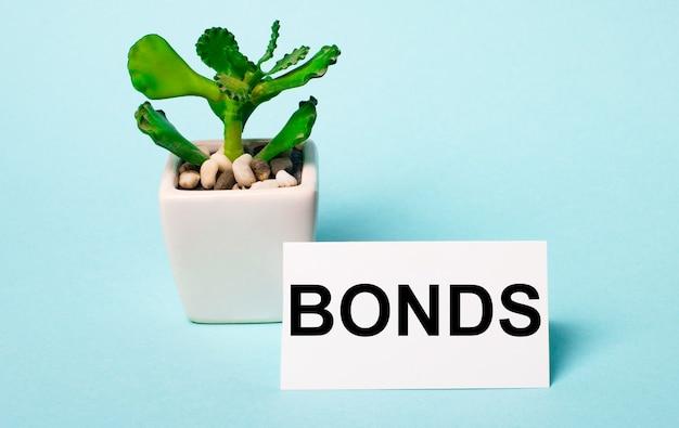 Su uno sfondo azzurro - una pianta in vaso e una carta bianca con la scritta bonds.