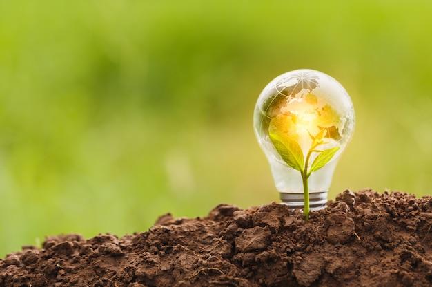 Le lampadine trasmettono il concetto di crescita dell'energia pulita e crescita del business. avviare il concetto di business, concetto di csr