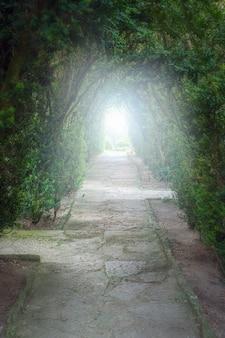 Luce alla fine del tunnel - tunnel verde naturale di alberi con luce alla fine.