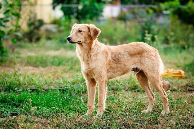 Cane di pelo chiaro con gioia