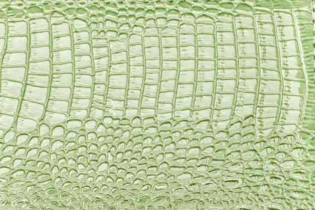 Priorità bassa di cuoio verde chiaro di struttura, primo piano. pelle di rettile, macro.