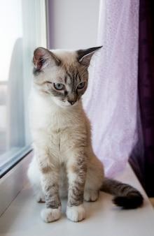 Gattino leggero seduto sul davanzale. gatti bianchi seduti sul davanzale della finestra e guardando una finestra con la luce del mattino, gatto che guarda fuori dalla finestra in una giornata di sole