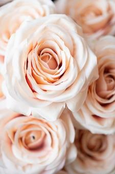 Colpo a macroistruzione del fondo del modello della rosa arancione chiaro