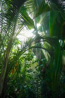 Raggio di luce in una foresta pluviale nella giungla. sfondo tropicale
