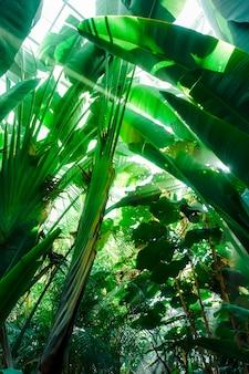 Raggio di luce in una foresta pluviale della giungla. sfondo tropicale