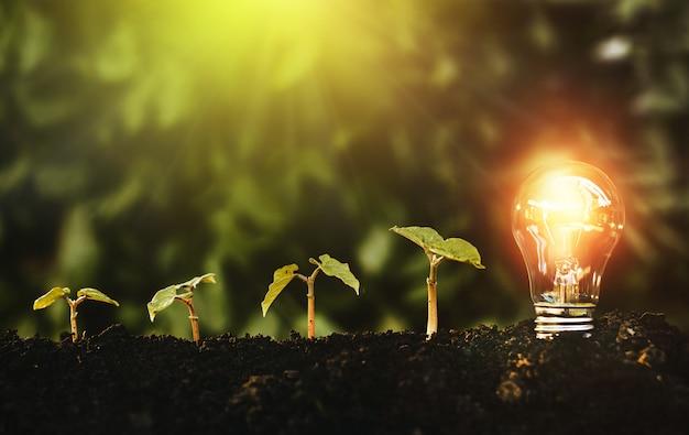 La lampadina si trova sul terreno e le piante stanno crescendo.