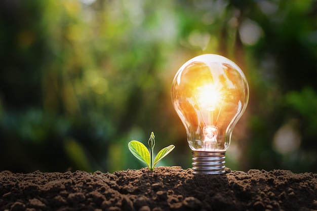 Lampadina con piccola pianta su suolo e sole. concetto di risparmio energetico in natura