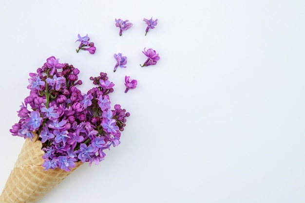 Fiori lilla in un cono gelato su una priorità bassa bianca.